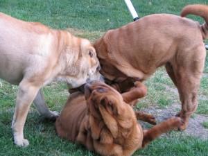 groupe de chiens jeux