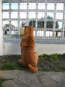 Edo-San derrière la clôture