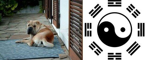Avoir un chien, c'est Feng Shui!