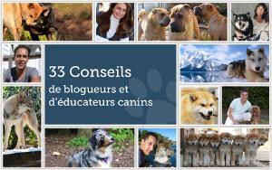 33 conseils de blogueurs et d'éducateurs canins