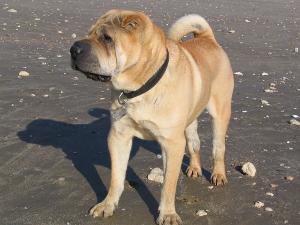 chien avec un collier