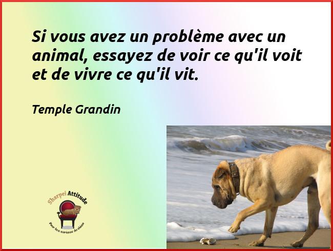 Top Si vous avez un problème avec un animal (citation) JM21
