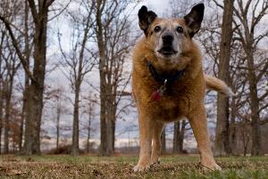 chien de face - photo AndyMc