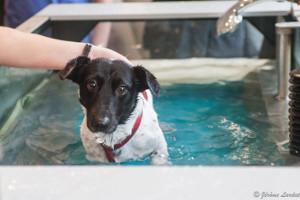 tapis aquatique chien
