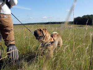 complicité entre le maître et son chien