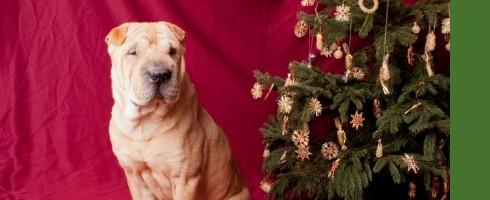 Des fêtes sans danger pour votre chien !