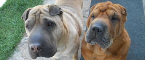 Cinq astuces pour trouver le temps d'éduquer votre chien