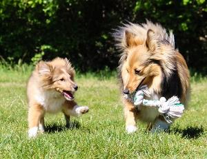 socialiser-chien1
