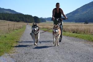 Une balade en vélo avec votre chien, ça vous dit?