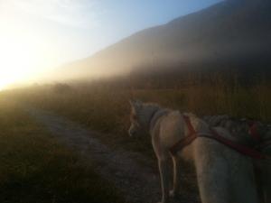 A vélo, avec son chien, pour découvrir des paysages de toute beauté et de nouvelles sensations.