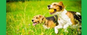 Des idées fausses sur les chiens pointées du doigt par six experts