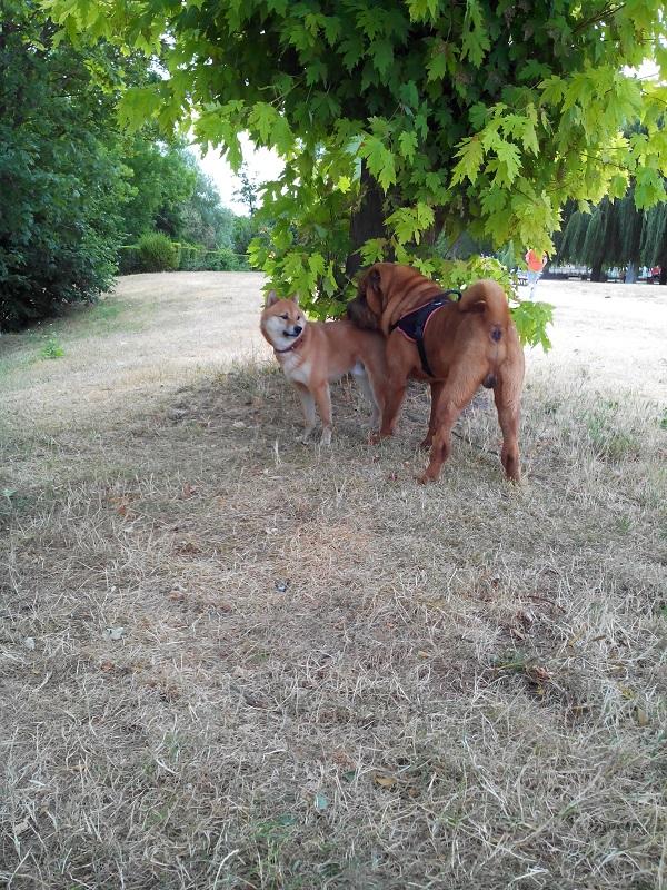 Site de rencontre entre chiens