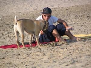 Laissez le chien venir de lui-même.