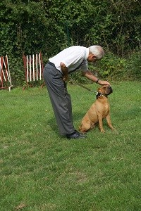 Évitez de vous pencher sur le chien, de le contraindre.
