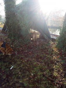 chiens qui explorent