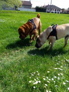 les chiens aiment renifler les odeurs