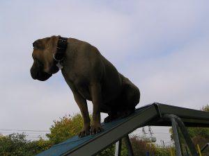 Un chien nous aide à changer de perspective