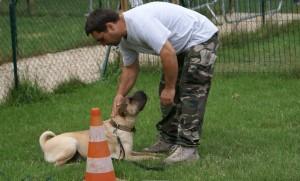 relation de confiance avec son chien