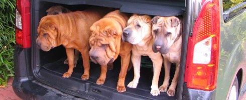 Comment gérer plusieurs chiens sous votre toit (par Pat Miller) – 1/3