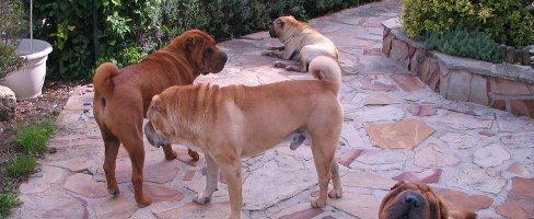 Comment gérer plusieurs chiens sous votre toit (par Pat Miller) - 3/3