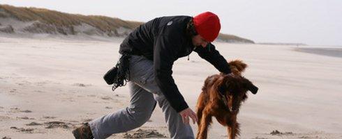 Comment faire garder son chien ?