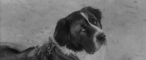 L'histoire du chien qui m'a fait aimer les chiens