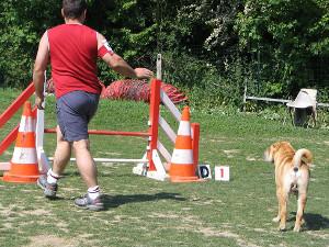 geste chien - depart parcours agility
