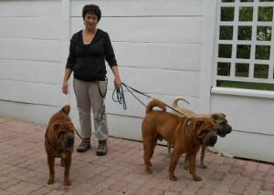promenade avec trois chiens