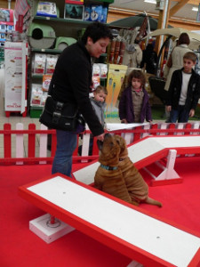 demo education de chiots