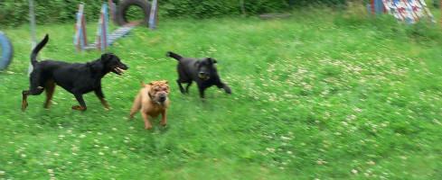 Communication entre chiens : vidéo