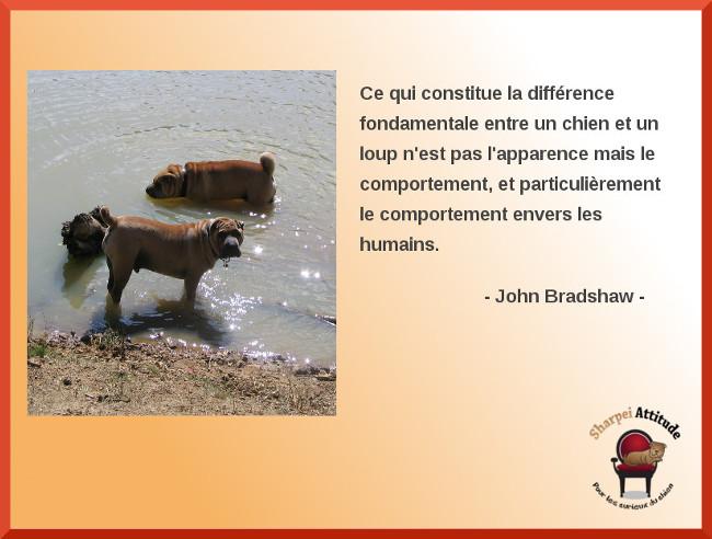 comportement-Bradshaw