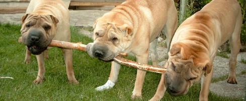 Un chien LOF ou NON LOF ? (deuxième partie)