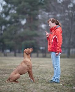 education canine femme