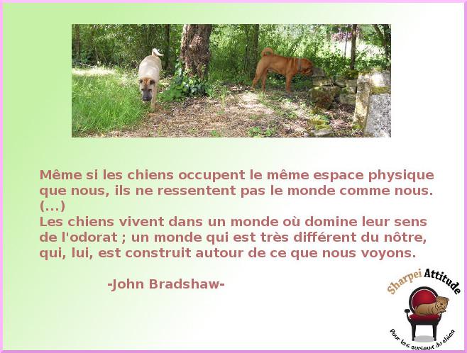 monde-bradshaw
