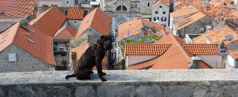 On fait quoi du chien cet été ?