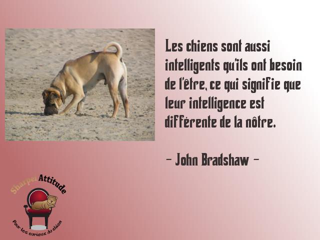 Bradshaw-intelligence
