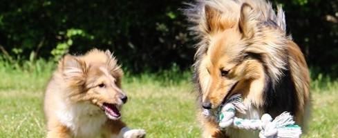 7 idées pour mieux sociabiliser mon chien