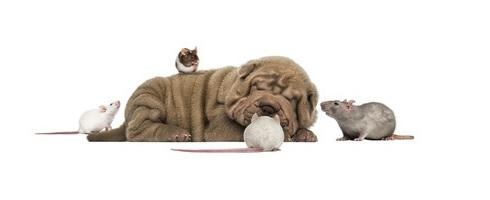 Changez l'étiquette de votre chien : catégorisation et effet Pygmalion