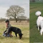 Gérer une bagarre entre chiens
