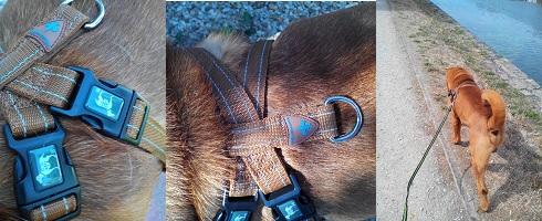 Mon chien a testé le harnais Bellomania