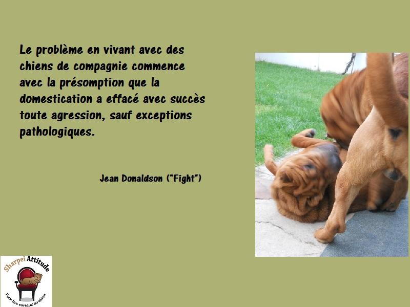 citation-agression-JDonaldson