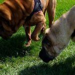 Comment bien promener son chien