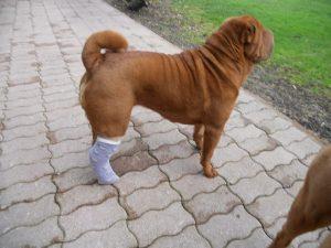 Il y aura toujours des soins à apporter à son chien.