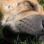 Le chien, un formidable outil de développement personnel