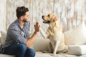 La méthode employée doit respecter à la fois le maître et le chien. (crédit: © YakobchukOlena)
