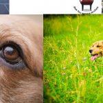 Les mots du jour : savoir écouter son chien