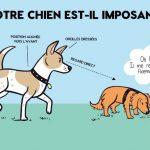 Votre chien et ses congénères (posters)