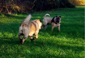 rencontre chiens sans laisse