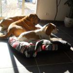 Les chiens aiment la routine !
