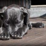 Y a-t-il de la place pour un chien dans votre vie ?
